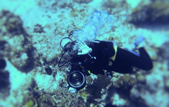 Submarinismo en el Caribe, Royal Hideaway Playacar hotel en Playa del Carmen