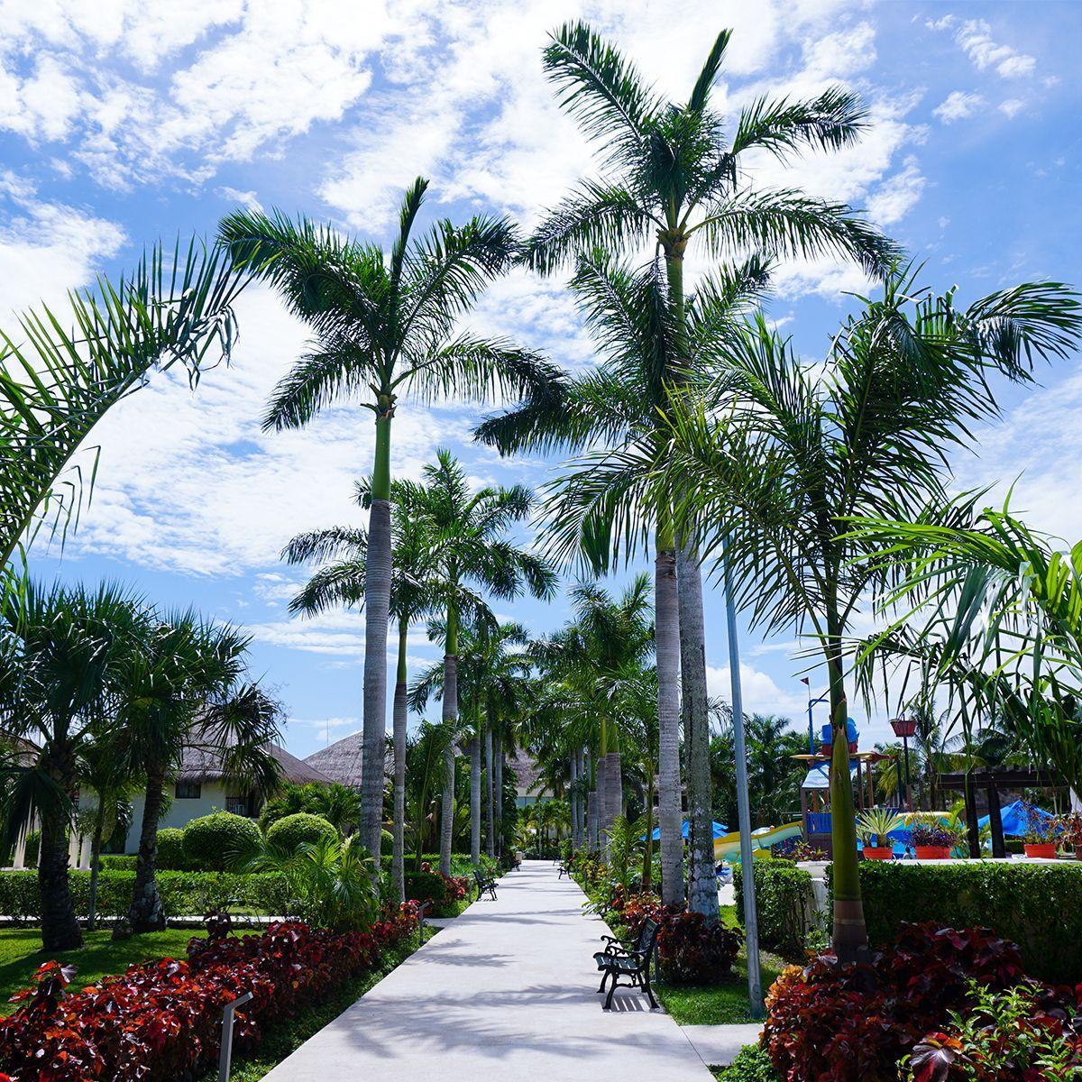 Los mejores sitios que visitar en unas vacaciones en el Caribe: Cozumel